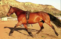 Flaire lady ext trot