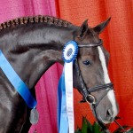 Gal and her Grand national ribbons