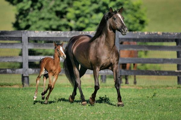 Majesty My Fair Lady and her 2008 filly by Rosevale Leggo