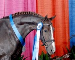 Galaxie and her Grand National ribbons