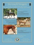 MWM ad for thesport horse issue TMH