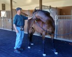equine-therapies-stretch