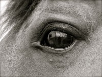 Looking into the Soul of a Horse