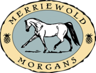 Merriewold Morgans