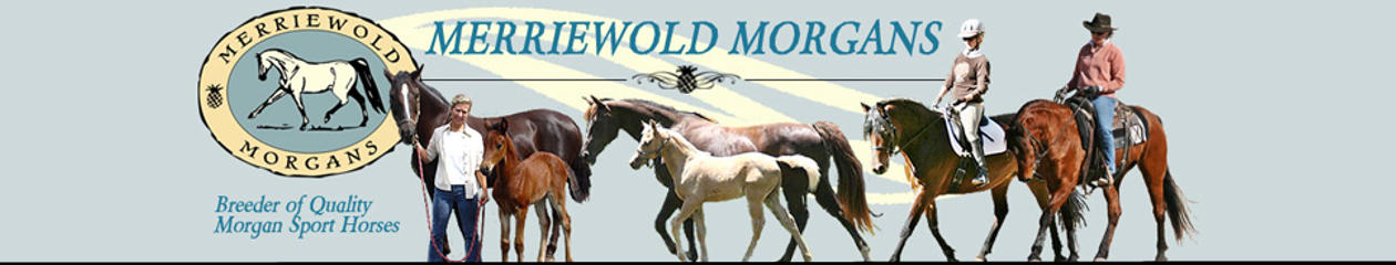 Merriewold News & Horses For Sale