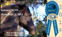 2014 International Morgan Horse Photo Contest Starts
