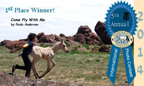 2014 Morgan Horse Photo Contest Winner