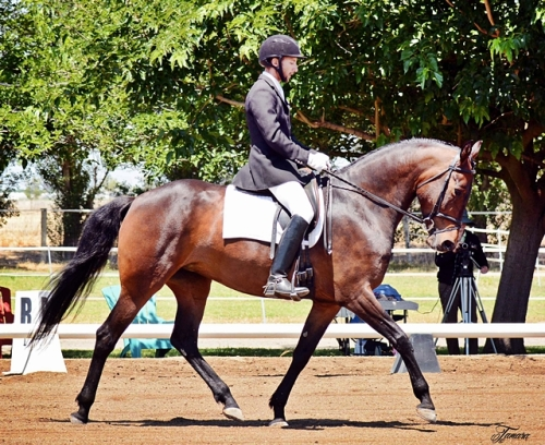 Alejandro and Kirin Dressage Classic, 3