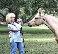 Photographing your horse