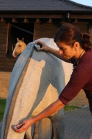 Crystal energy healing for horse and rider.